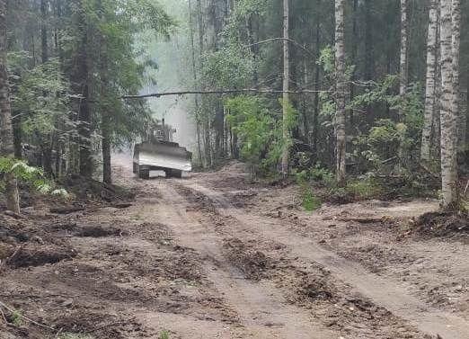 Больше 300 гектаров леса горит в Костромской области: ввели режим ЧС