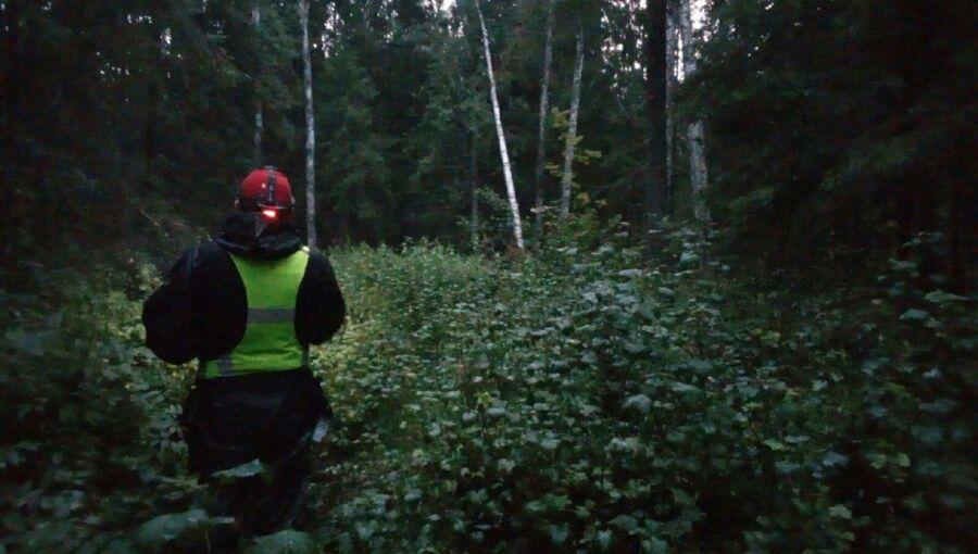 Силуэт в лесу заставил костромичей визжать от радости