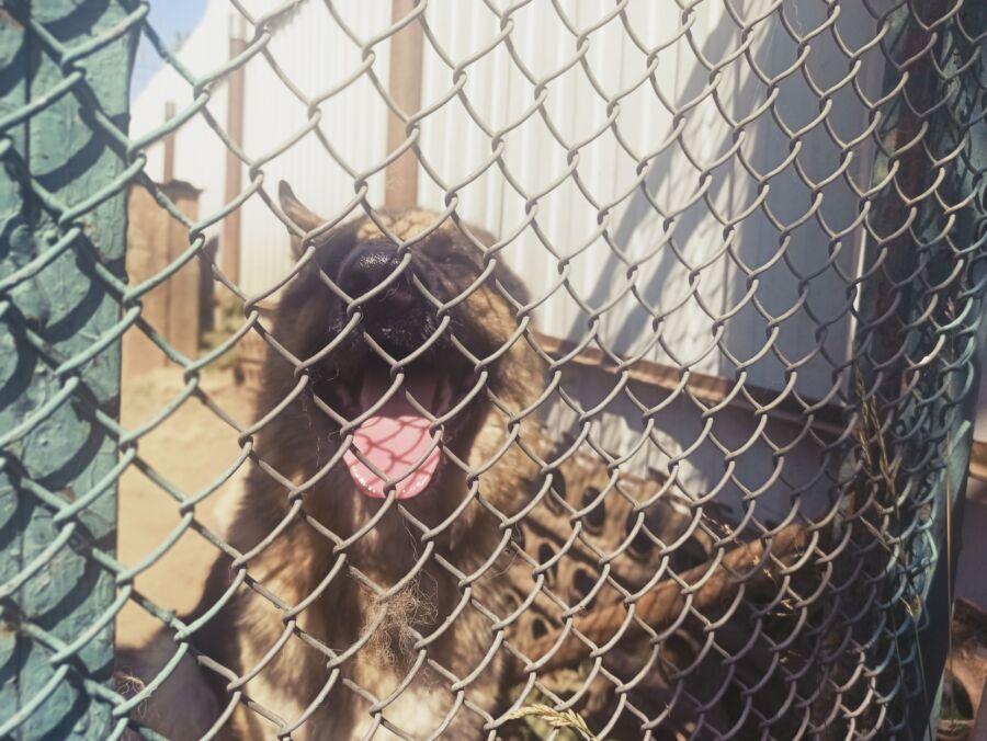 Прокуратура заинтересовалась условиями жизни животных в центре передержки