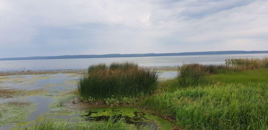 Чиновники пообещали очистить Галичское озеро, но не очень быстро