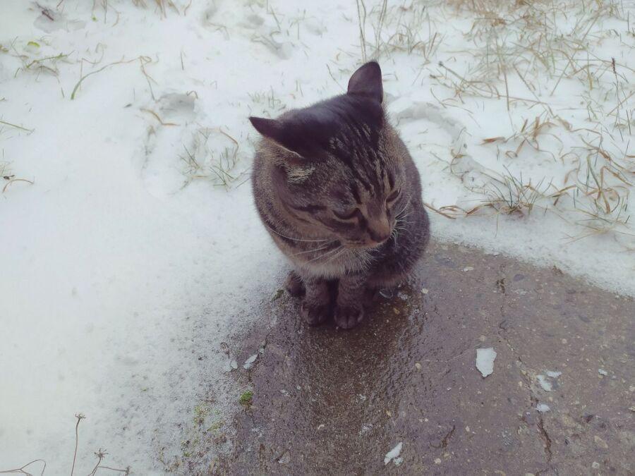 Ой, мороз-мороз: ночные заморозки в Костроме станут нормой