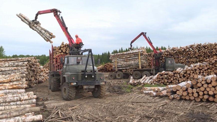 Лес помог обогатить костромскую казну на полмиллиарда рублей