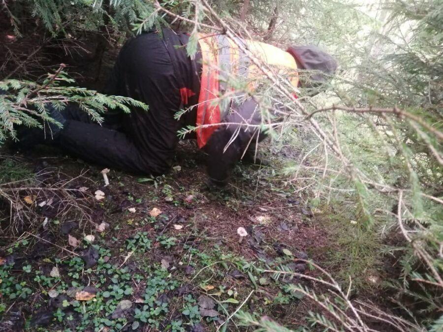 Пожилого грибника ищут в костромском лесу почти 10 дней